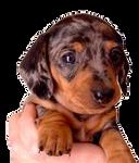 dog by mickmickmick