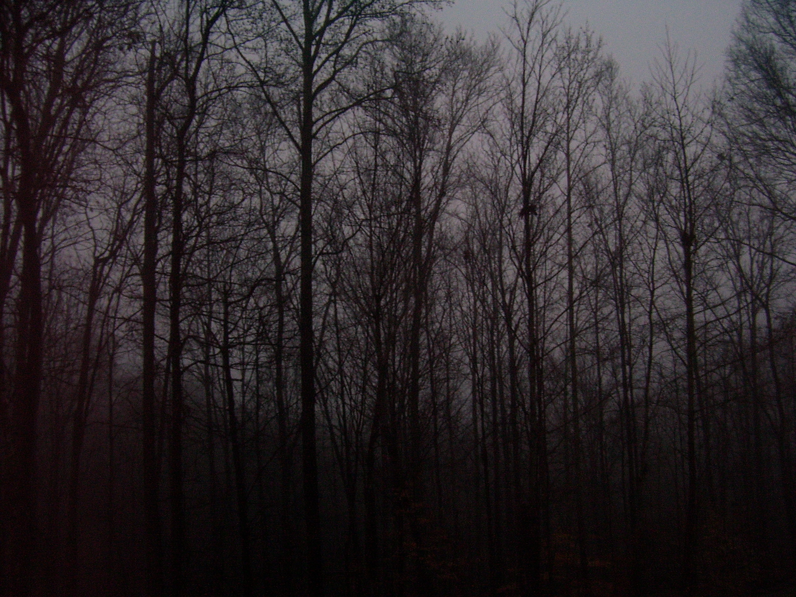 foggy forest by a - photo #27