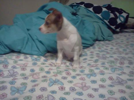 New puppy :3