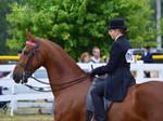 Saddlebred Stock _ 001