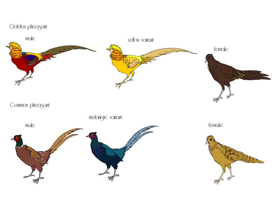 pheasant breeds part 1 by mechanicalmasochist