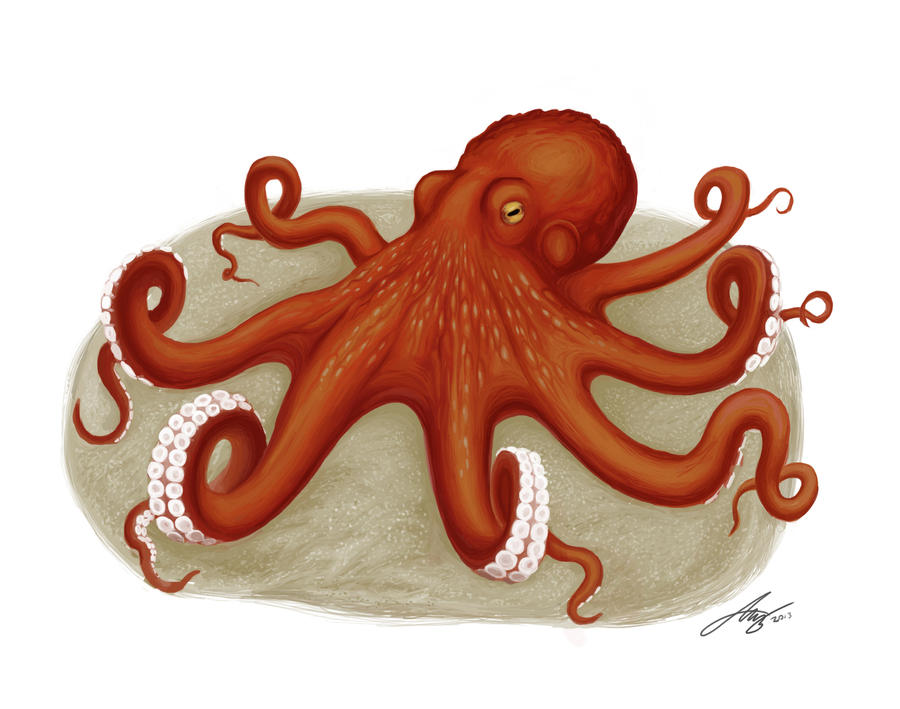 Octopus by Andreiuska