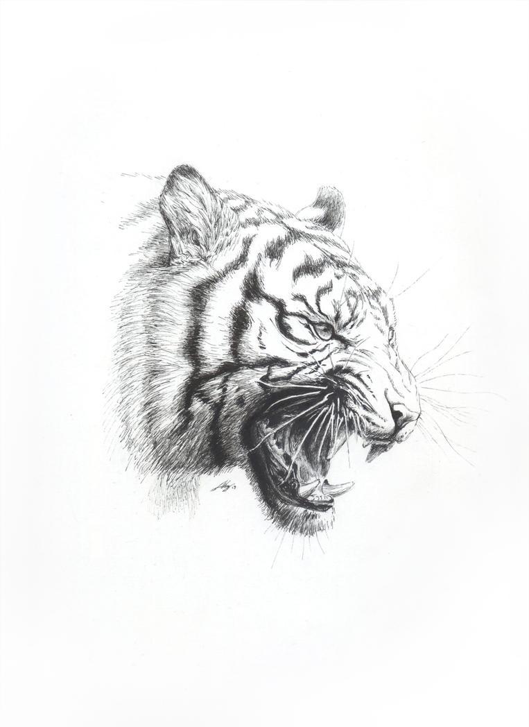 Tigre: rugido No. 2 by Andreiuska