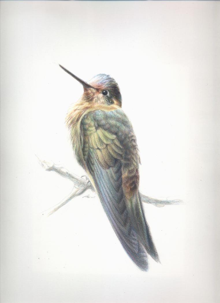 Colibri by Andreiuska