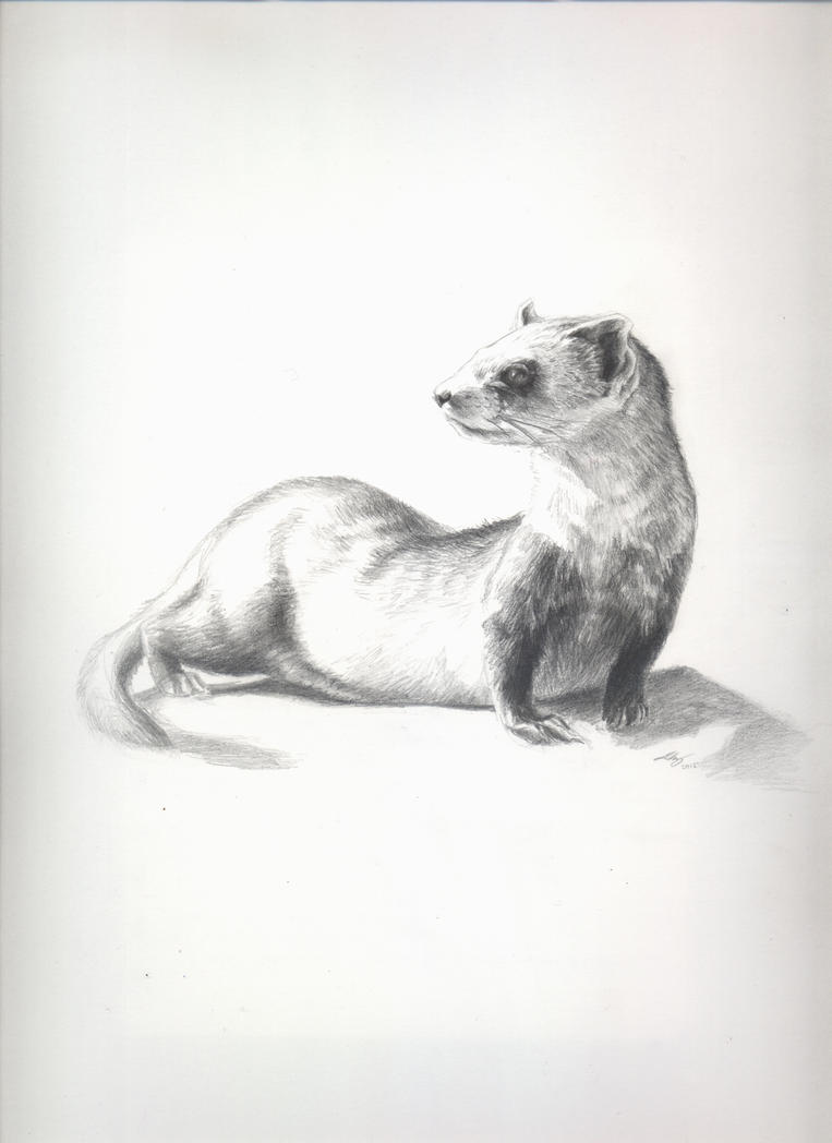 Ferret by Andreiuska