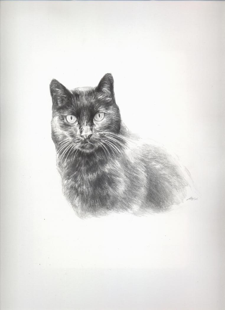 Gato negro by Andreiuska