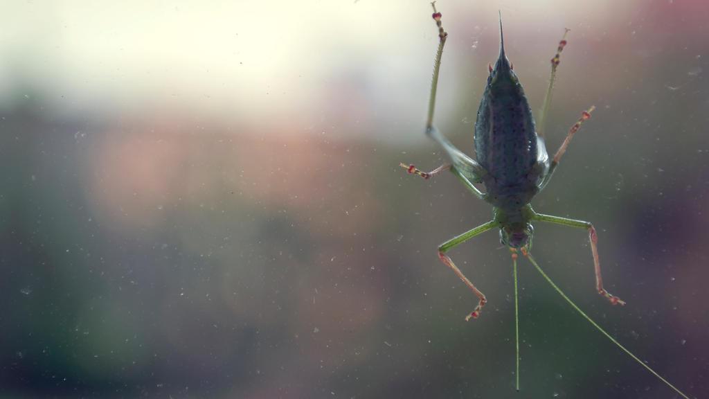 Don't mind me. I'm just a grasshopper. by Flono