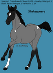 Shakespeare Foal 11 2013: Sold