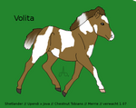 Volita Foal 15 2013: For Sale