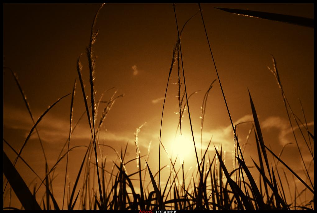 Staring Into The Sun by metallilan