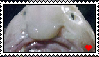Blobfish Love Stamp by wolfhey