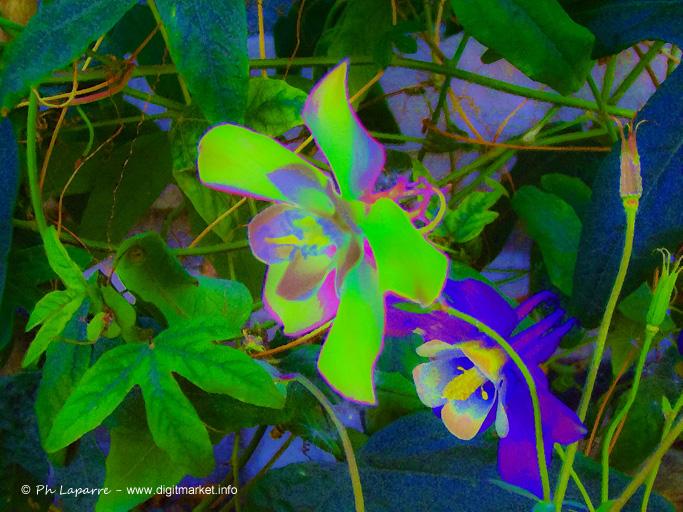 Magic Flower 002 by DigitPhil