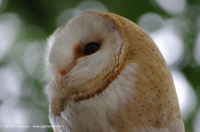 owl by DigitPhil