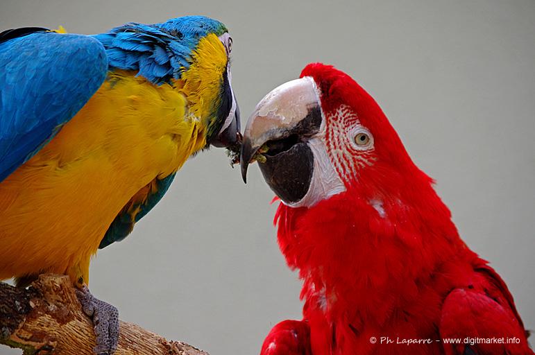 is it love ? by DigitPhil