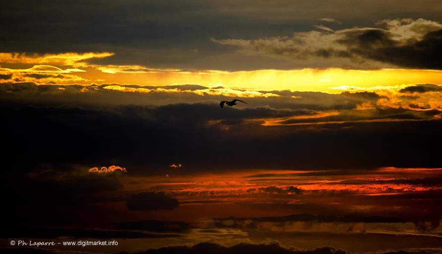 Amazing Sky by DigitPhil