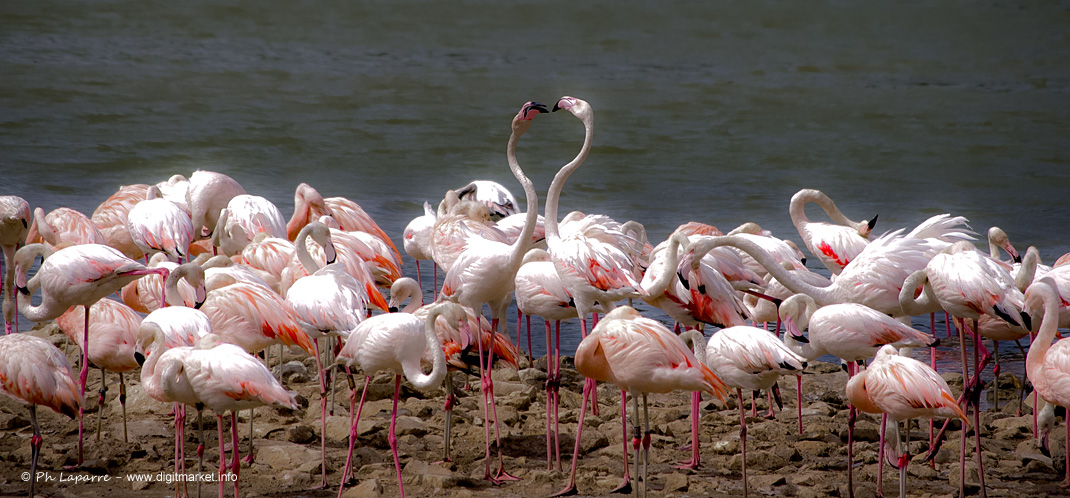 Flamingo Parade by DigitPhil