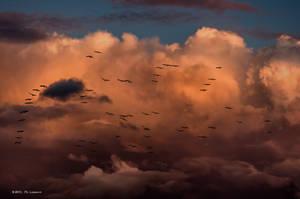 Migration II by DigitPhil