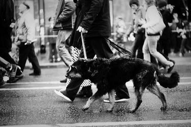 Rebel dog by mariashooter