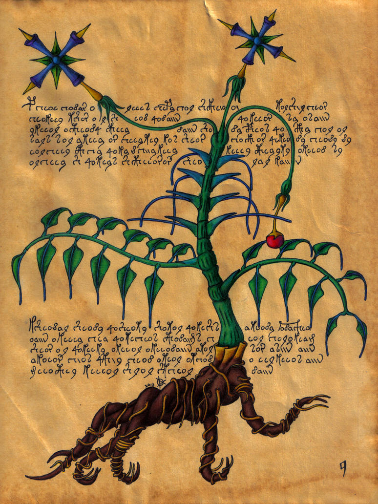 Dante sangreal the voynich manuscript part two by think abstract on
