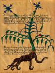 Voynich Dreams VI by DanteSangreal