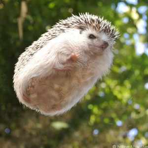 GrootsOfHedgehogs's Profile Picture