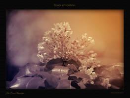 fleurs envoutees by hydrocean