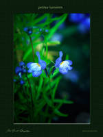 Petites lumieres by hydrocean