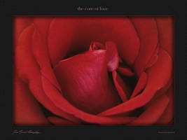 the core of love by hydrocean