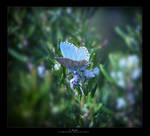in blue by hydrocean