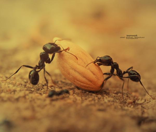 Teamwork by hydrocean