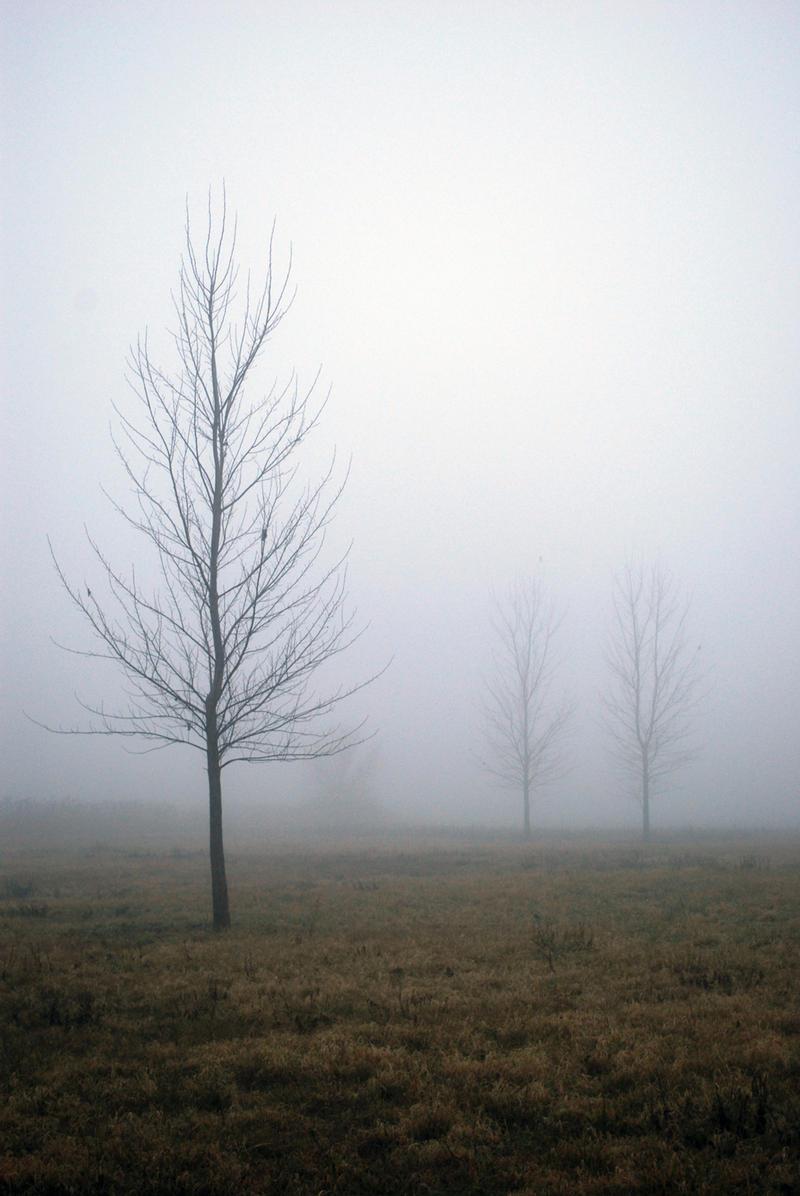 Fog I.