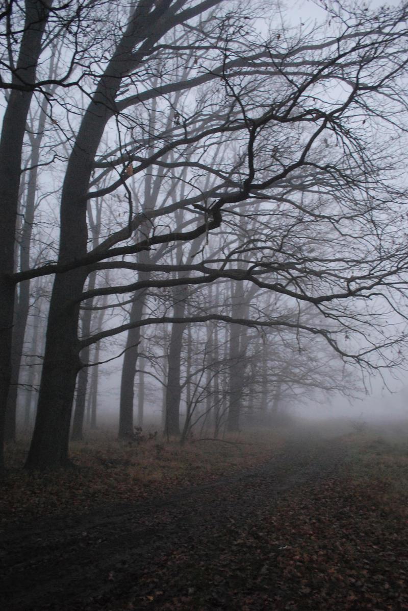 Fog II.