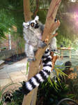 SOLD Poseable ring tailed lemur art doll