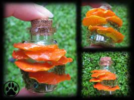 Chicken of the woods mushroom mini bottle! by CreaturesofNat