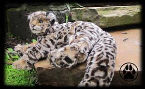 SOLD Kalu the leopard cub poseable art doll! by CreaturesofNat