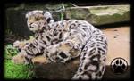 SOLD Kalu the leopard cub poseable art doll!