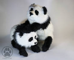 SOLD 4 Month Old Panda Cubs artdolls by CreaturesofNat