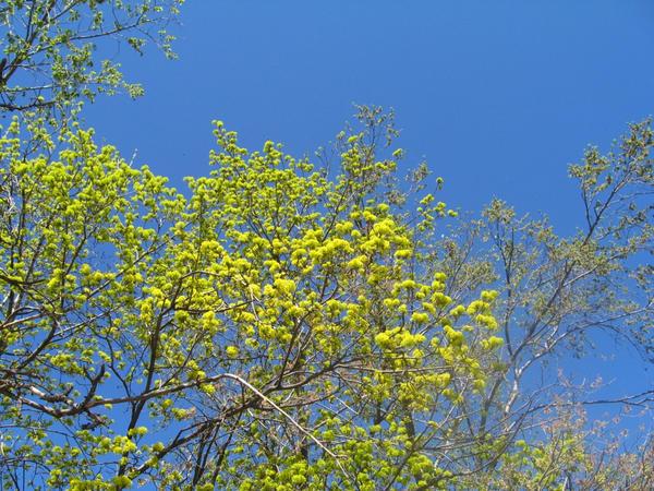 Springtime sky by AnastasieLys