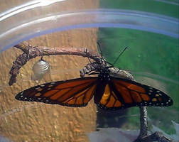 monarch 2 by KenshinKyo