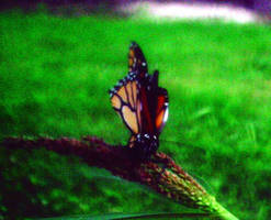 monarch 3 by KenshinKyo
