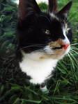 Pretty Kitty by KenshinKyo