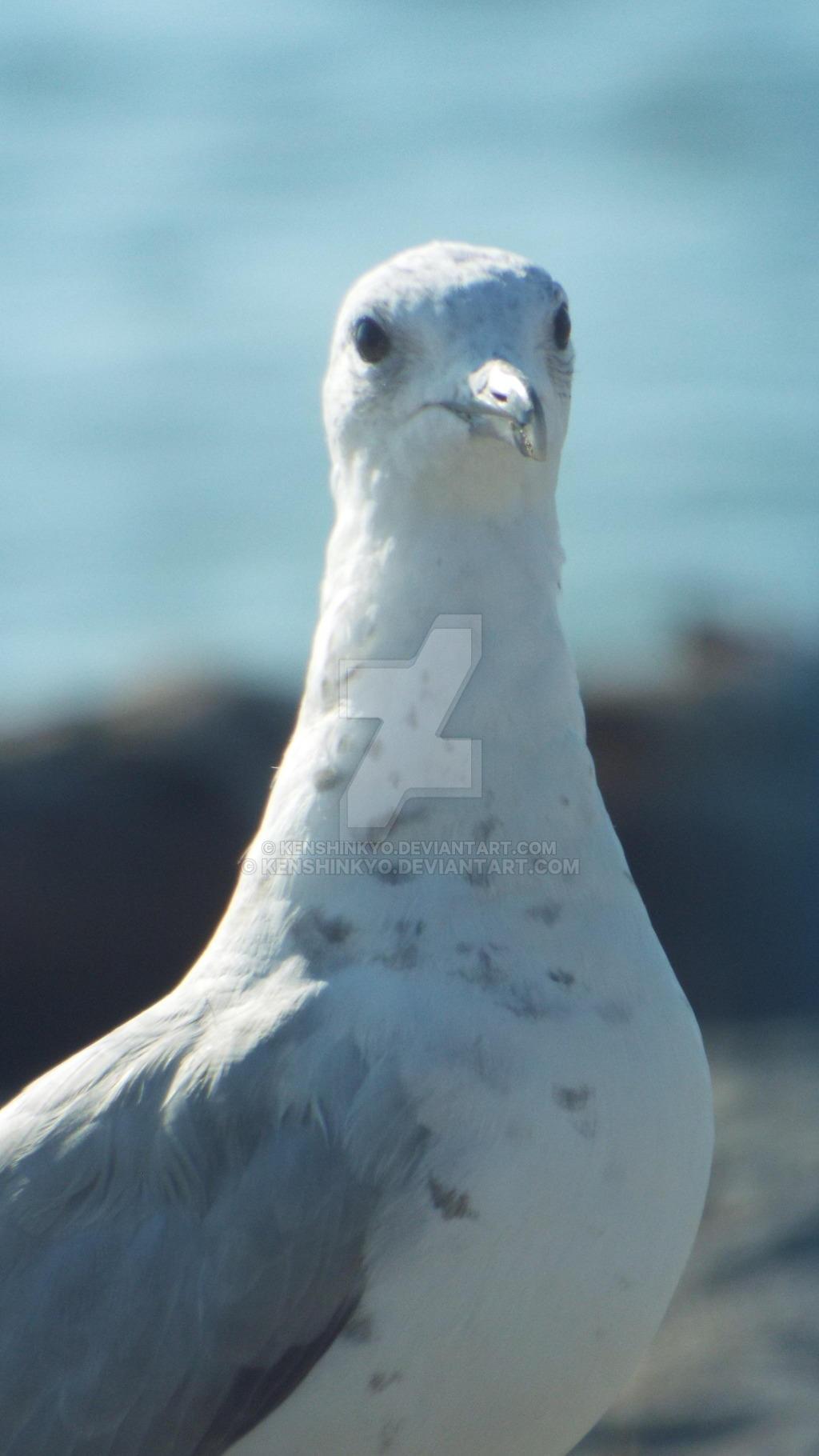 Seagull a by KenshinKyo