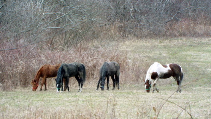 Horses out in the field