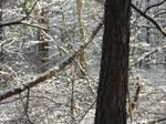 Winter Wounderland