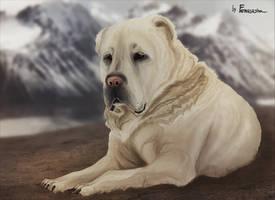 Alabai - Central Asian Shepherd Dog