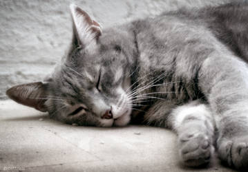 Sweet life of a cat by caithness155