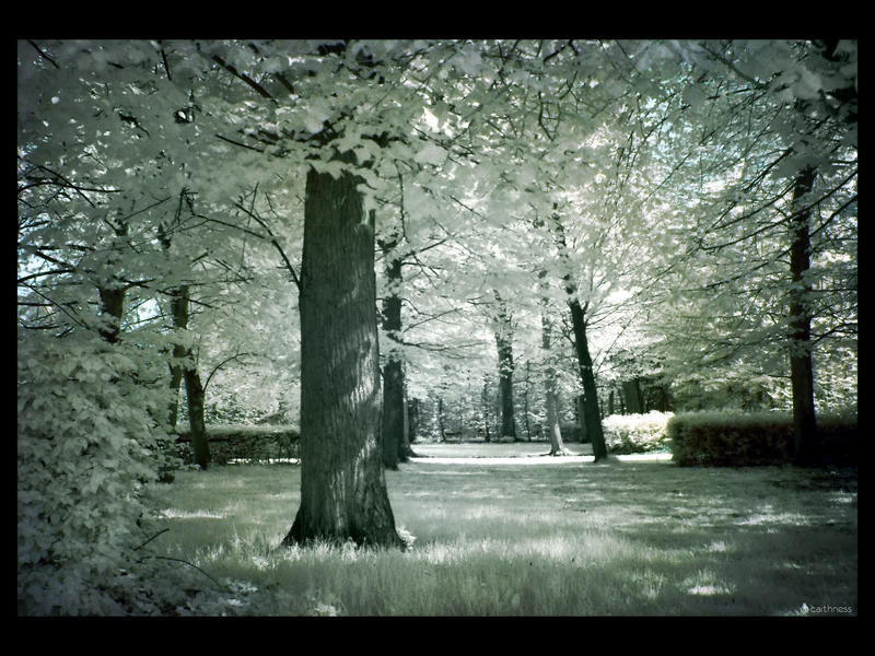 Losing my colors IR by caithness155
