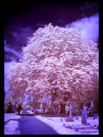 Marshmallow tree IR by caithness155
