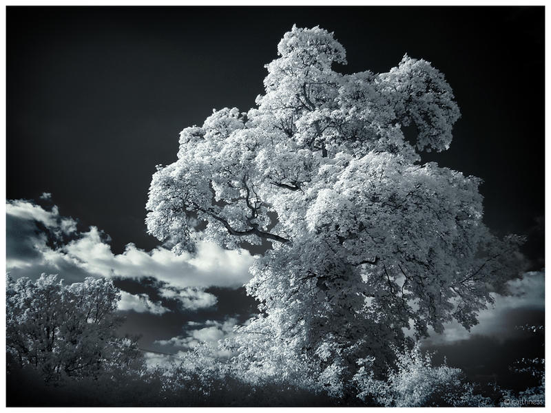 Solid foam IR by caithness155