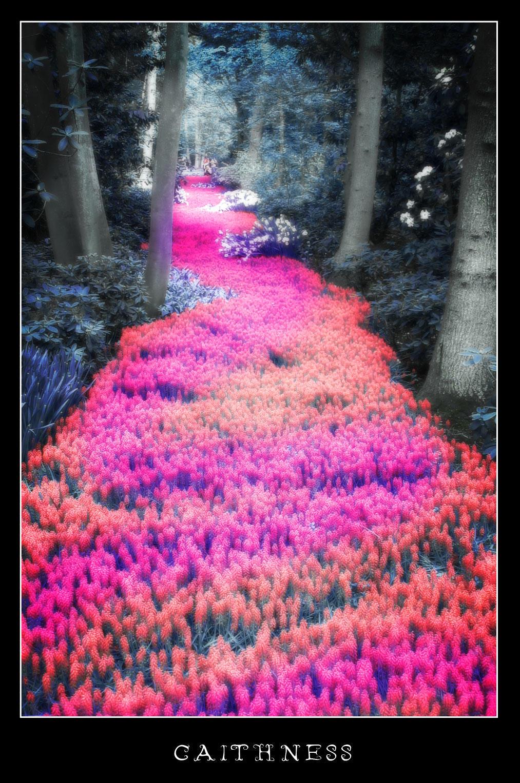 chemin de fleurscaithness155 on deviantart